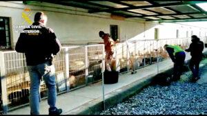 La Guardia Civil detiene al responsable de un criadero de perros y a un veterinario por cortarles las cuerdas vocales a los animales